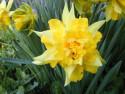 Tapeta Nejkrásnější květiny