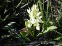 Tapeta Nejkrásnější květiny 10
