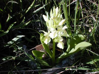 Tapeta: Nejkrásnější květiny 10