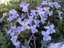 Tapeta Nejkrásnější květiny 12