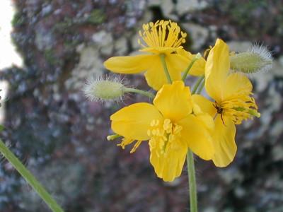 Tapeta: Nejkrásnější květiny 13