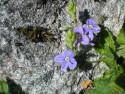Tapeta Nejkrásnější květiny 14