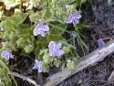 Tapeta Nejkrásnější květiny 15