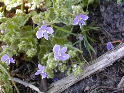 Tapeta: Nejkrásnější květiny 15