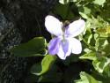 Tapeta Nejkrásnější květiny 16