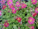 Tapeta Nejkrasnější květiny 18