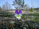 Tapeta Nejkrásnější květiny 2