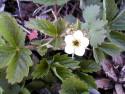 Tapeta Nejkrasnější květiny 20