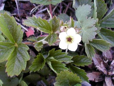 Tapeta: Nejkrasnější květiny 20