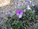 Tapeta Nejkrásnější květiny 3