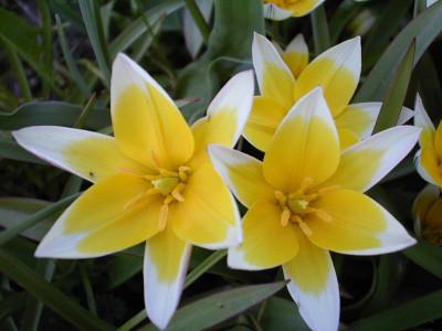 Tapeta: Nejkrásnější květiny 4