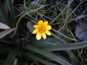 Tapeta Nejkrásnější květiny 6