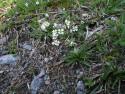 Tapeta Nejkrásnější květiny 7
