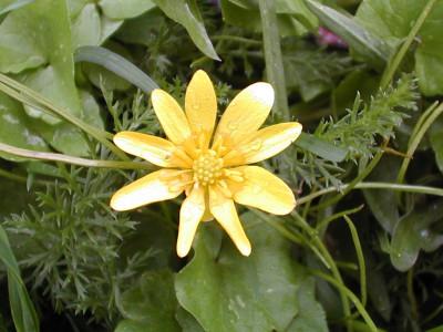Tapeta: Nejkrásnější květiny 8