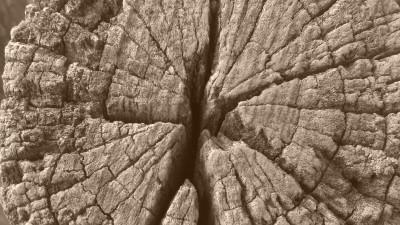 Tapeta: Není pařez jako pařez