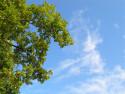 Tapeta Obloha na sklonku léta