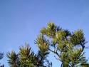 Tapeta Obrázky z přírody 11