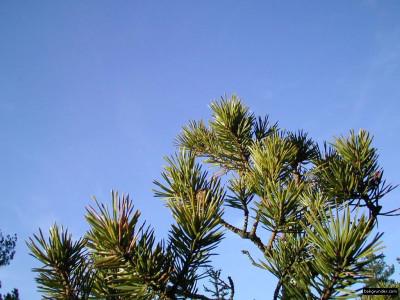 Tapeta: Obrázky z přírody 11