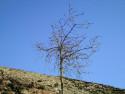 Tapeta Obrázky z přírody 7