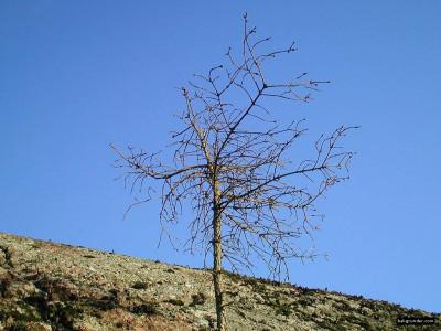 Tapeta: Obrázky z přírody 7