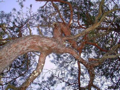 Tapeta: Obrázky z přírody 9