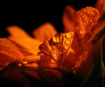 Tapeta: obyčejnost všedního dne - slui
