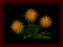 Tapeta ohnivé květy
