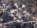 Tapeta Ojíněná tráva