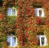 Tapeta Podzimní okna