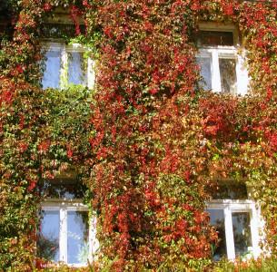 Tapeta: Podzimní okna
