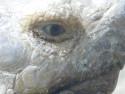Tapeta Oko želvy