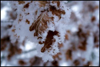 Tapeta: omrzlé listí
