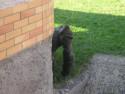 Tapeta Opičí kuk