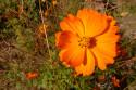 Tapeta Oranžová kytička