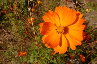 Tapeta: Oranžová kytička