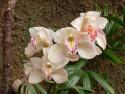Tapeta orchidej GC