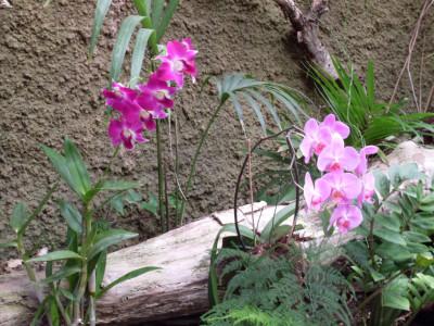 Tapeta: Orchidej Gran Canaria
