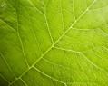 Tapeta Organic Veins