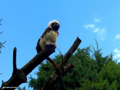 Tapeta: ostře sledovaní návštěvníci