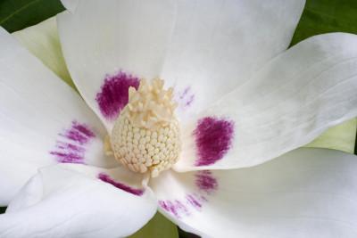 Tapeta: Květina