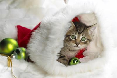 Tapeta: Koťátko