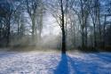 Tapeta Zimní ráno