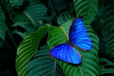 Tapeta: Motýl