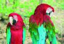 Tapeta papoušci
