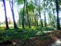 Tapeta paprsky v lese