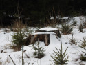 Tapeta Pařez pod sněhem