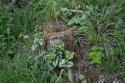 Tapeta Pařez v trávě