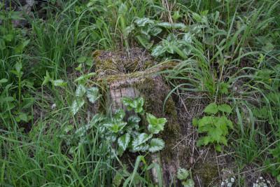 Tapeta: Pařez v trávě