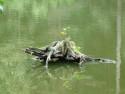 Tapeta Pařez ve vodě