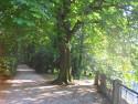 Tapeta Park6